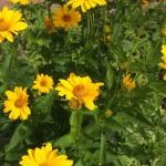Gelb in der Natur