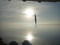 Hochseeangeln mit Ausgangshafen Schaprode auf Rügen