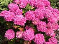 Farbenfrohe Pflanzenwelt