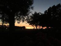Sonnenuntergang in der Gartenanlage am Hafen mit Blick nach Hiddensee.
